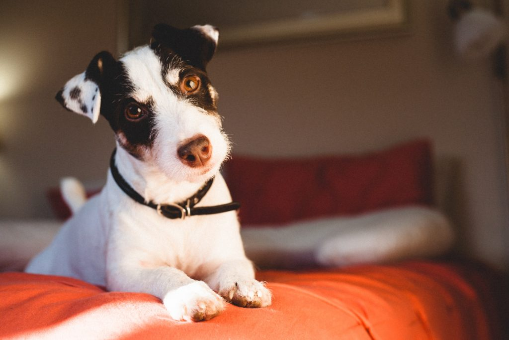 Separation Anxiety in Dogs​