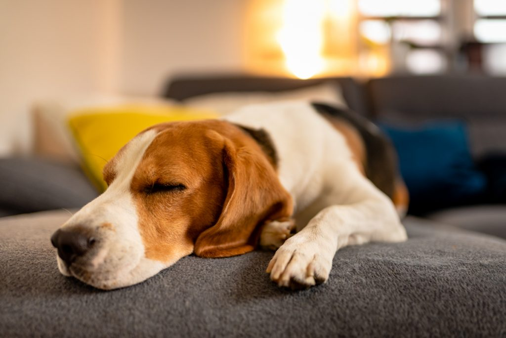 Dog Separation Anxiety Myths