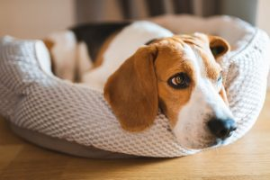 Dog Separation Anxiety Myths