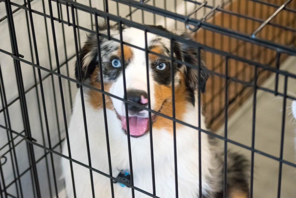 Should I Crate My Dog